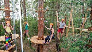 Treetop Bandung, Tempat Wisata Seru yang Memacu Adrenalin